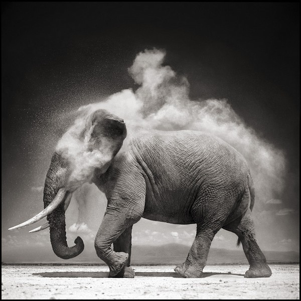 Nick Brandt's ELEPHANT WITH EXPLODING DUST, AMBOSELI, 2004