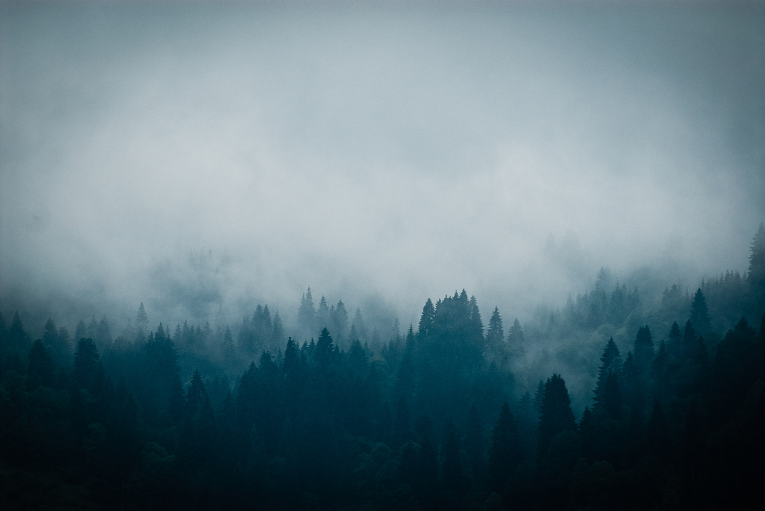 Dark and mysterious forests - landscape of foggy and misty forests of Bavaria, Germany by photographer Kimmo Savolainen.