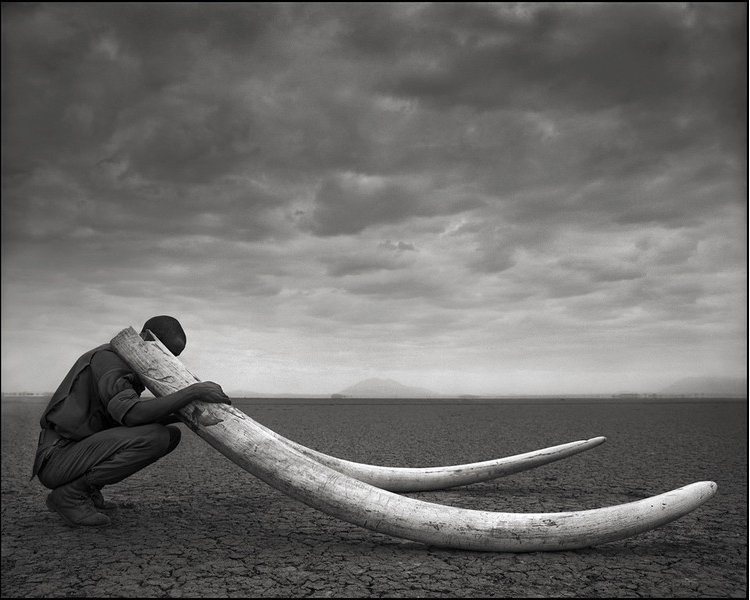 Nick Brandt's Ranger with Tusks of Killed Elephant,Amboseli 2011