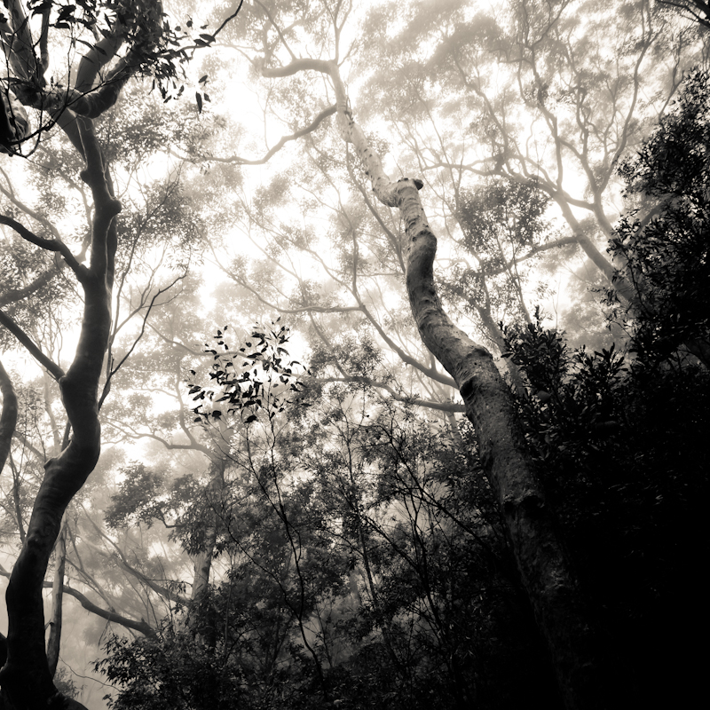 'Misty' - black and white fine art photography from Blue Mountains, Australia by Kimmo Savolainen.